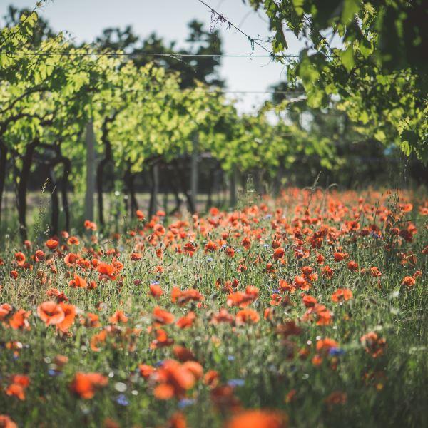 Coenecoop overduidelijk uw vin nature specialist